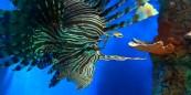 cropped-leon01.jpg