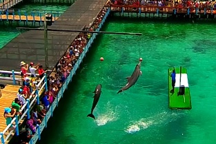delfines03
